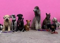 Shop For Dog Goodies - Thumbnail
