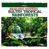 Nature Sounds - Healing Sounds - Sultry Tropical Rainforests (CD)