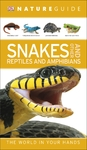 Nature Guide Snakes and Other Reptiles and Amphibians (Paperback)