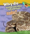 Why Do Snakes and Other Animals Have Scales? - Clare Lewis (Paperback)