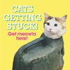 Cats Getting Stuck! (Hardcover)