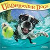 Underwater Dogs 2018 Calendar - Browntrout Publishers (Calendar)
