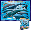 Eurographics - Whales & Dolphins Puzzle (100 Pieces) Cover