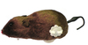 MCP - Wind Up Mouse Cat Toy (Pack of 12)