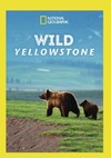 Wild Yellowstone (Region 1 DVD)