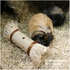 Rosewood - Toy Loofa Toss n Treat Roller