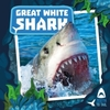 Great White Shark - Robin Twiddy (Hardcover)