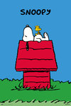 Peanuts - Snoopy Doghouse Maxi Poster (61x91,50cm)